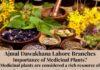 Ajmal Dawakhana Lahore Branches